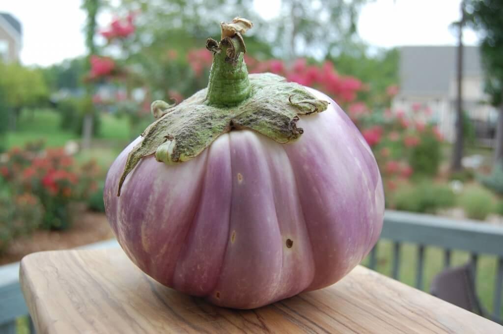 Large eggplant received from a CSA box from Poplar Ridge Farm.