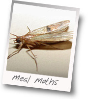 moths invaded our pantry bugs like real food too 100