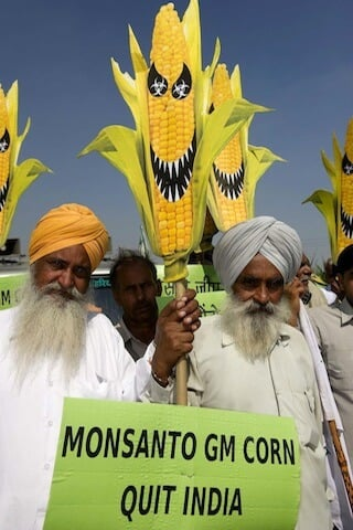 Indian farmers protest GMO corn
