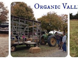 Organic Valley Farm Tour on 100 Days of #RealFood