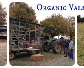 Organic Valley Farm Tour
