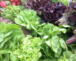 Bugs in My Organic Food?