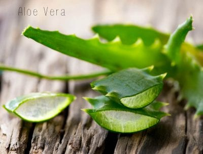 aloe vera can prevent frequent hair loss
