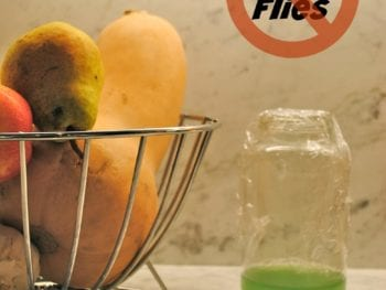 3 Ways to Get Rid of Pesky Fruit Flies