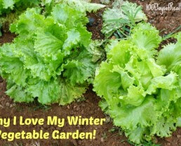 8 Reasons I LOVE My Winter Vegetable Garden