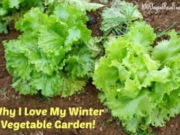 8 Reasons I LOVE My Winter Vegetable Garden
