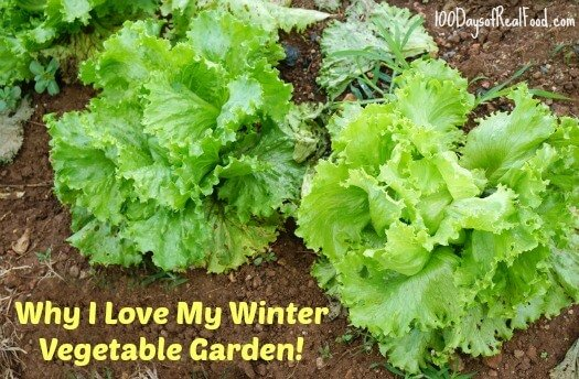 Why I love my winter vegetable garden on 100 Days of Real Food