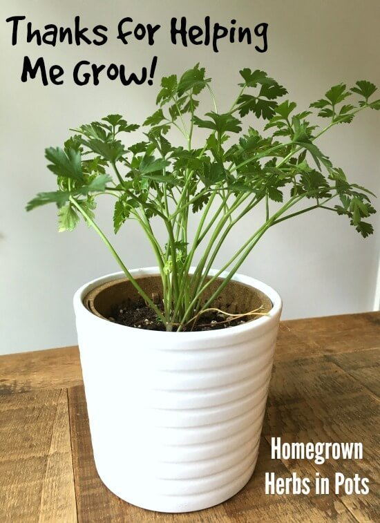 Homegrown Herb Teacher Gift on 100 Days of Real Food