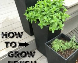 How to Grow Fresh Herbs (and save loads of money!)