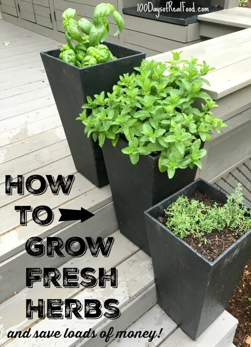 How to grow fresh herbs on 100 Days of Real Food