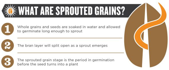 What are Sprouted Grains? on 100 Days of Real Food
