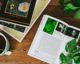 How 4 Common Tea Herbs May Help