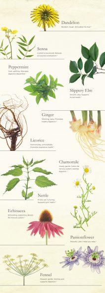 Common Tea Herbs on 100 Days of Real Food