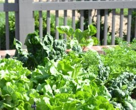 Our Veggie Garden: From Sad to Spectacular!