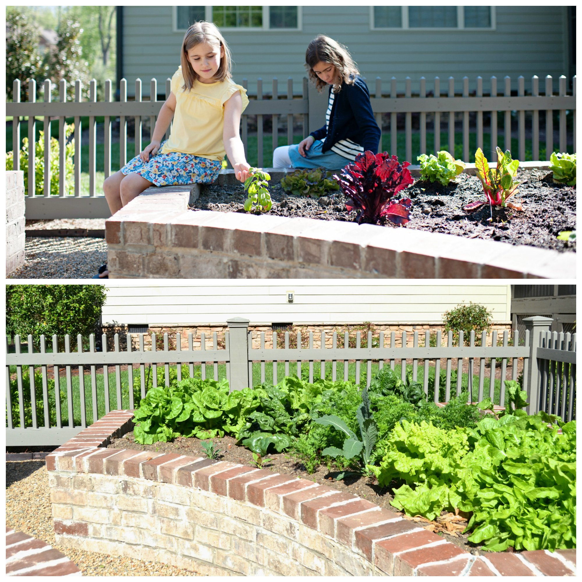 Our Veggie Garden: From Sad to Spectacular! on 100 Days of Real Food