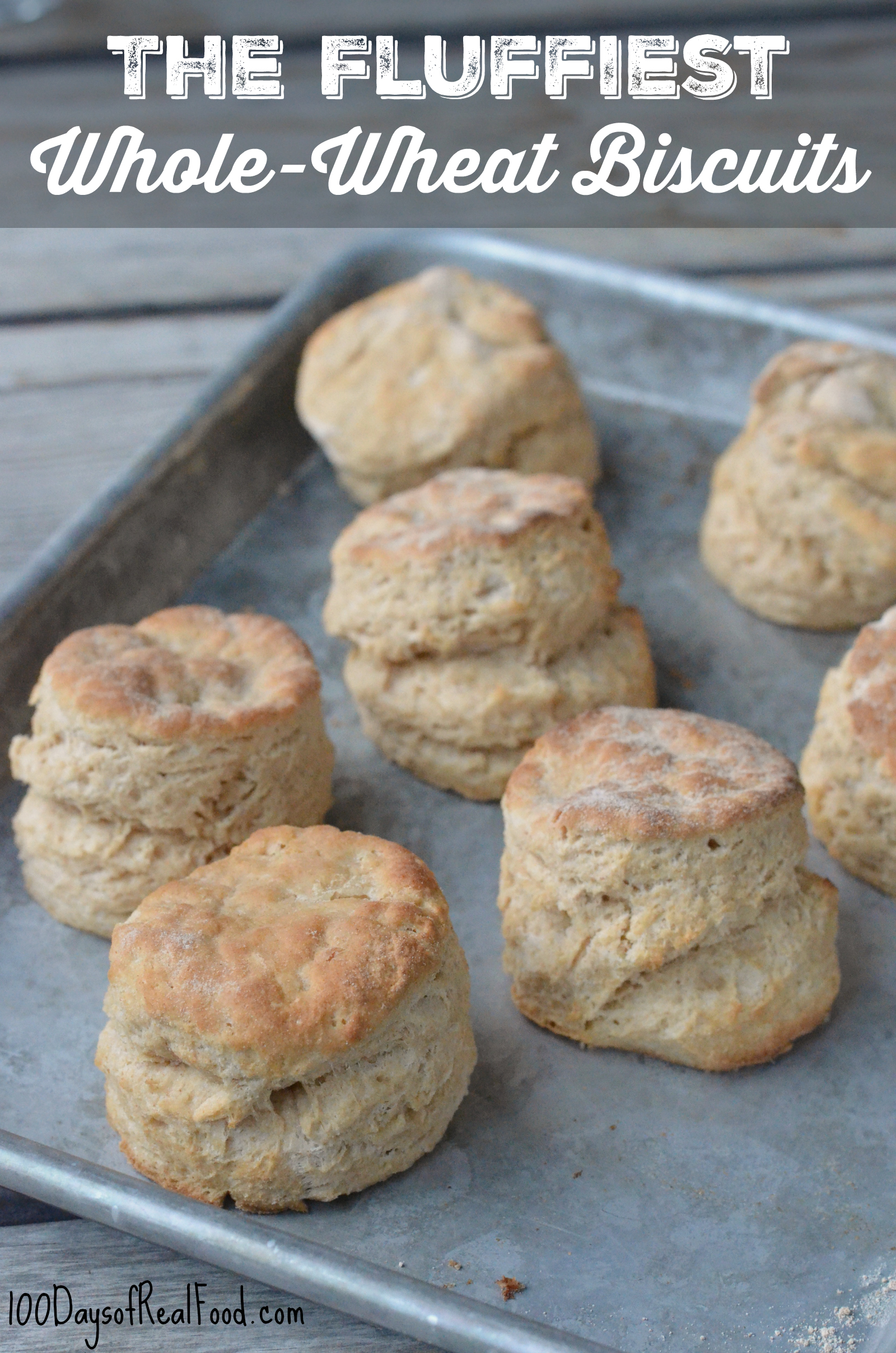 Fluffiest Whole-Wheat Biscuits on sheet pan