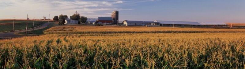 Grassland Dairy farm