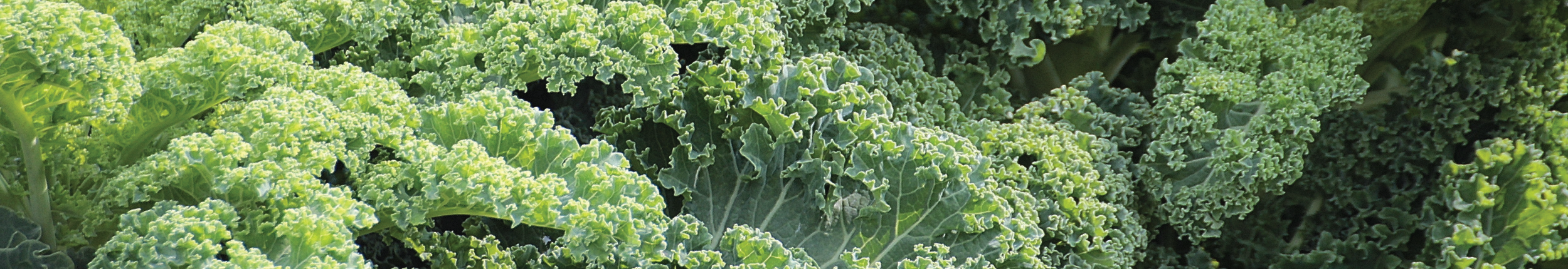 Kale on the dirty dozen